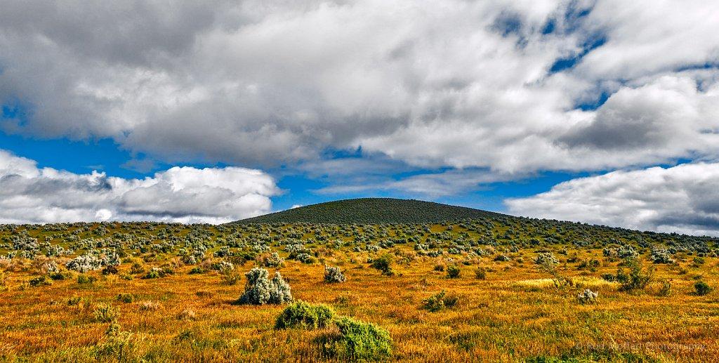 Saltbush and rolling hills
